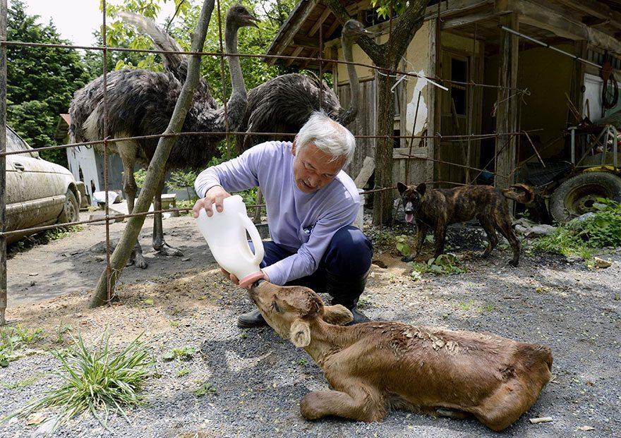 Man-risks-his-life-to-save-animals-left-in-Fukushima-6
