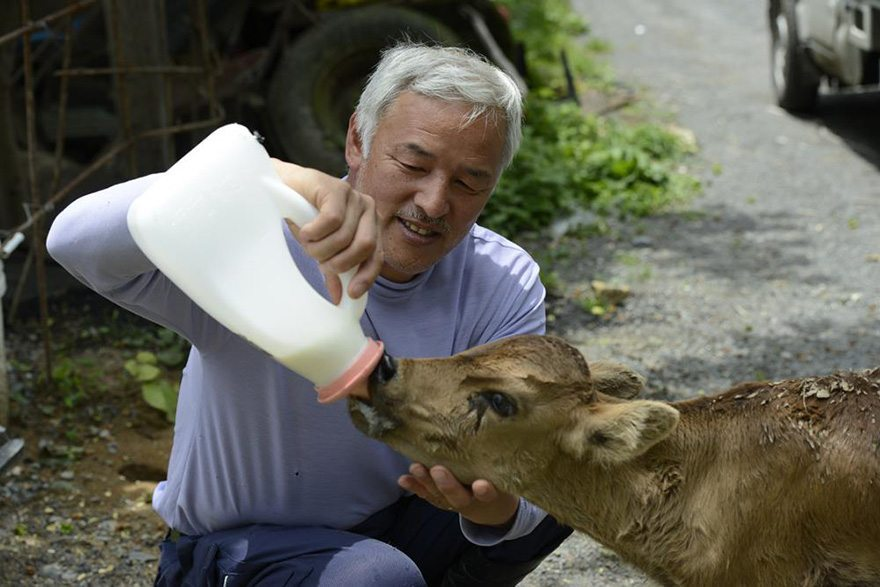 Man-risks-his-life-to-save-animals-left-in-Fukushima-8