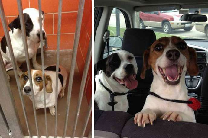 Stray-dogs-who-started-to-love-life-1