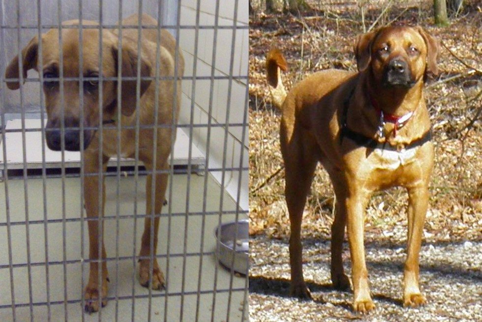 Stray-dogs-who-started-to-love-life-11
