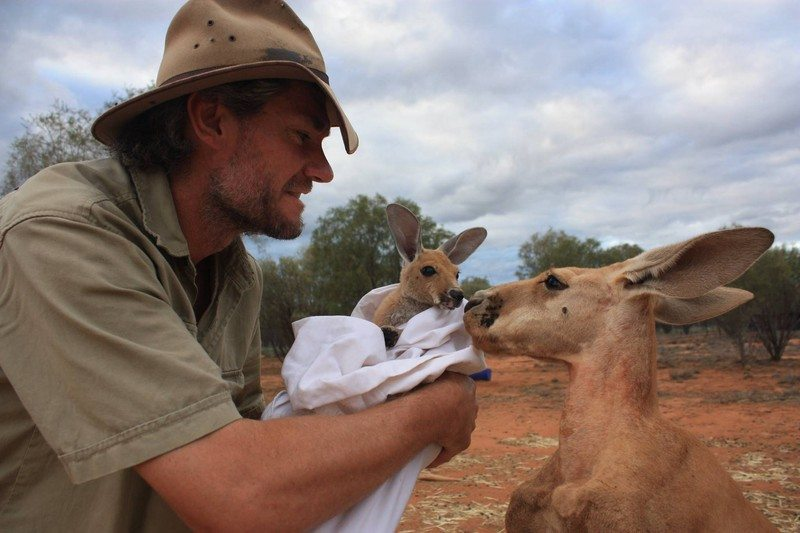 baby-kangaroos-have-no-chance-to-survive-unless-they-meet-this-guy-12