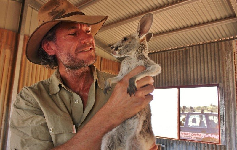baby-kangaroos-have-no-chance-to-survive-unless-they-meet-this-guy-14