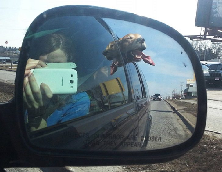 Dogs-that-love-to-ride-in-a-car-more-than-anything-in-life-18