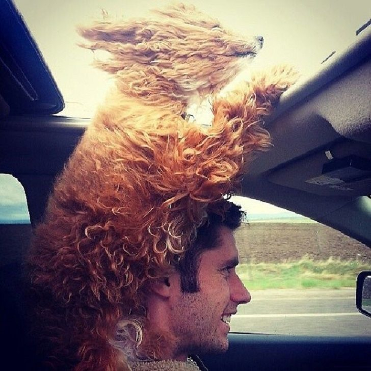 Dogs-that-love-to-ride-in-a-car-more-than-anything-in-life-21
