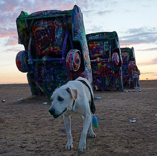 Terminally-ill-dog-and-his-owner-travel-together-10