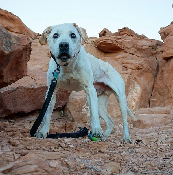 Terminally-ill-dog-and-his-owner-travel-together-12