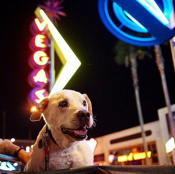 Terminally-ill-dog-and-his-owner-travel-together-3