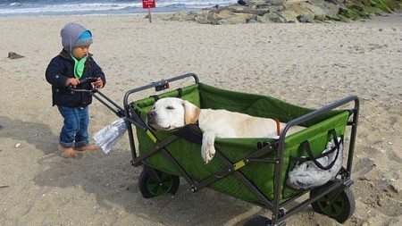 Terminally-ill-dog-and-his-owner-travel-together-5