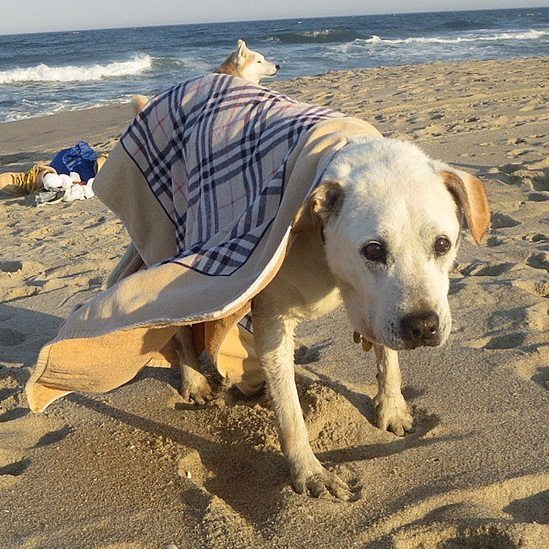 Terminally-ill-dog-and-his-owner-travel-together-6