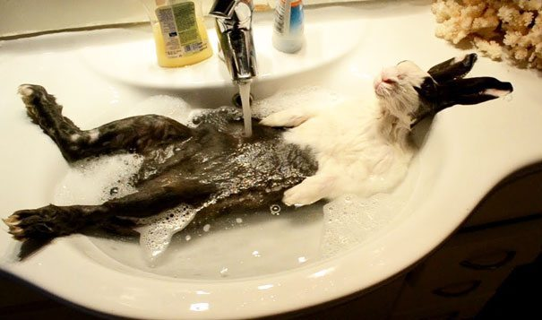 Pics-of-animals-enjoying-bathing-1