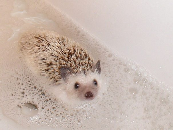 Pics-of-animals-enjoying-bathing-14