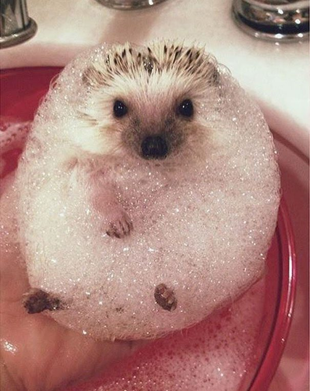 Pics-of-animals-enjoying-bathing-2
