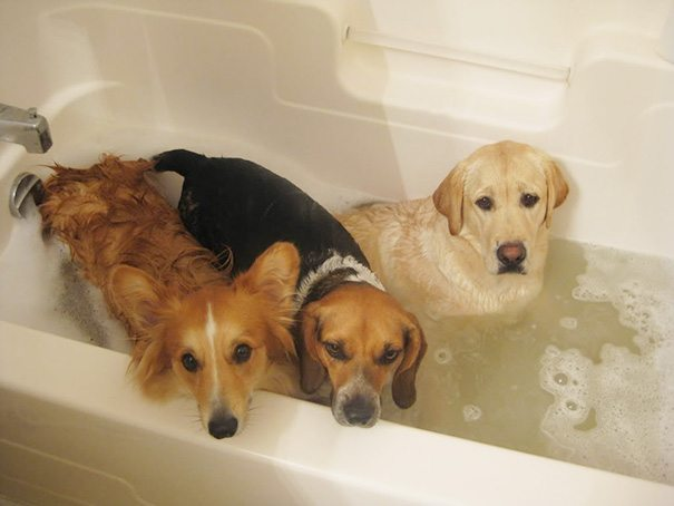 Pics-of-animals-enjoying-bathing-21
