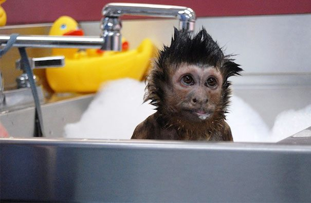 Pics-of-animals-enjoying-bathing-22