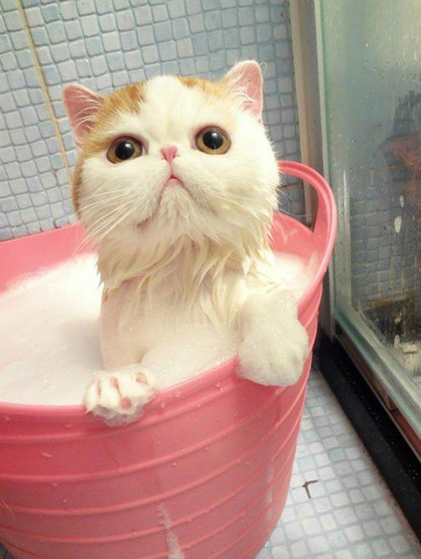 Pics-of-animals-enjoying-bathing-23