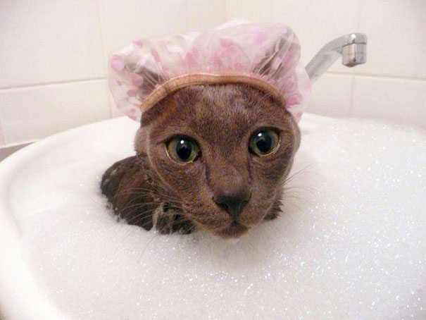 Pics-of-animals-enjoying-bathing-24