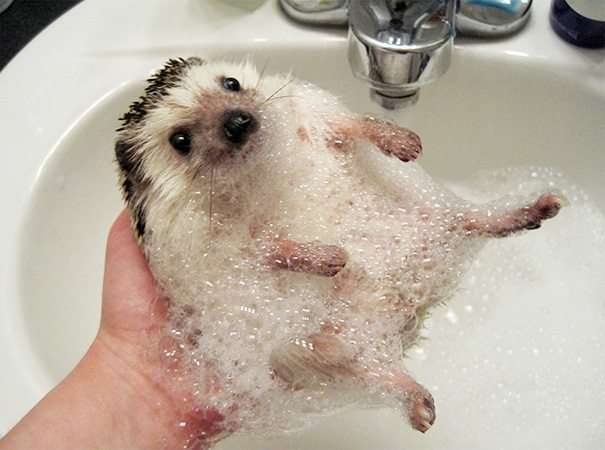 Pics-of-animals-enjoying-bathing-25