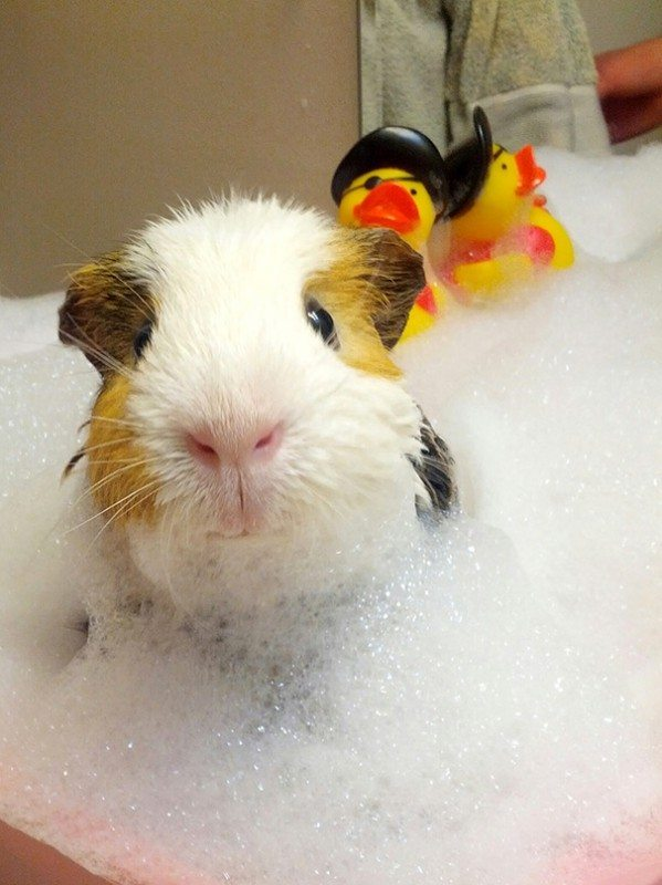 Pics-of-animals-enjoying-bathing-31