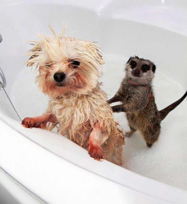 Pics-of-animals-enjoying-bathing-7