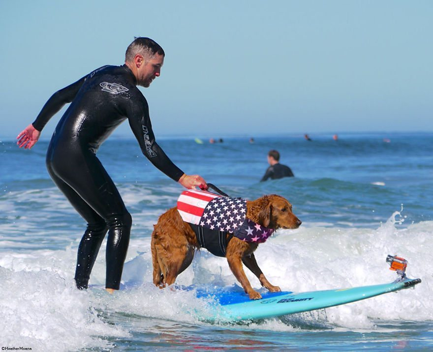 Dog-surfs-with-sick-people-and-helps-them-12
