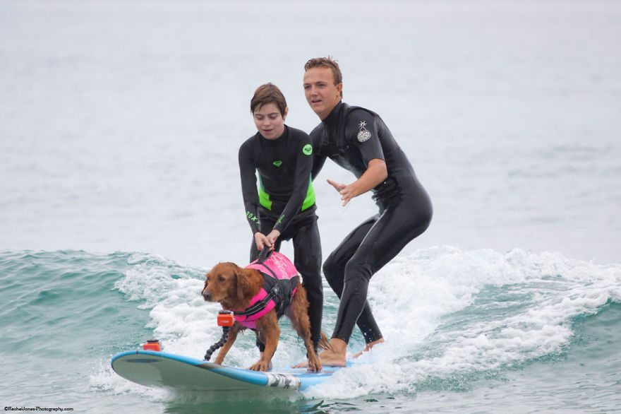 Dog-surfs-with-sick-people-and-helps-them-13