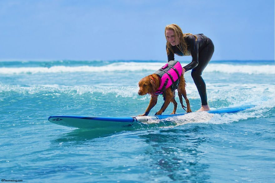 Dog-surfs-with-sick-people-and-helps-them-3