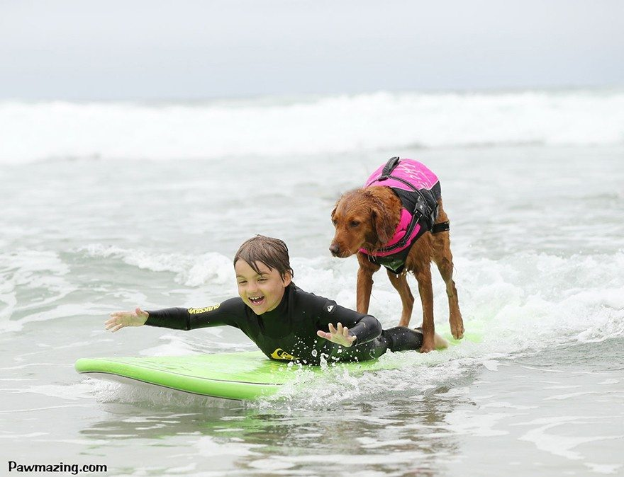 Dog-surfs-with-sick-people-and-helps-them-5