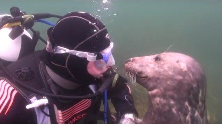 Atlantic-seal-proved-to-the-world-that-not-only-pets-but-also-wild-animals-love-affection