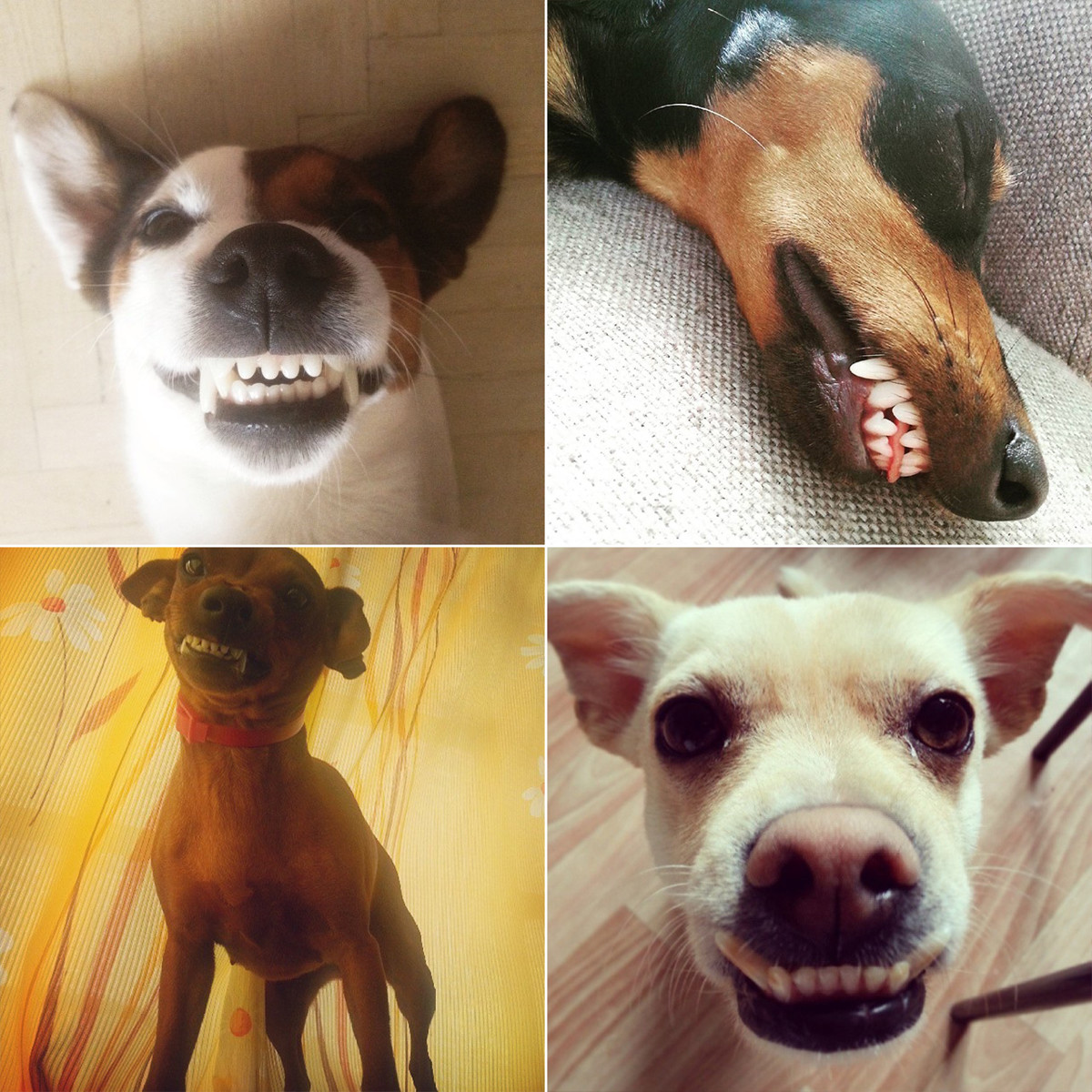 Dogs-mood-is-extremely-changeable-5