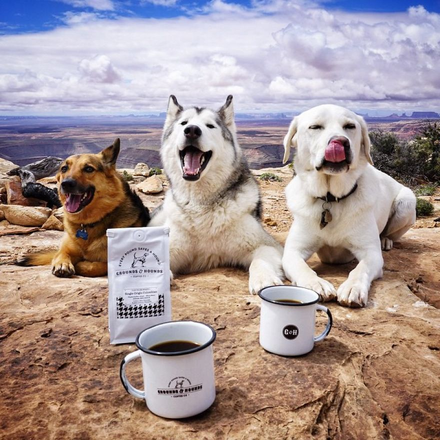 Important-to-travel-with-your-pets-10