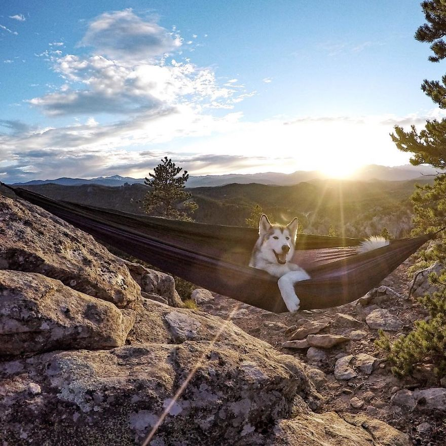 Important-to-travel-with-your-pets-11