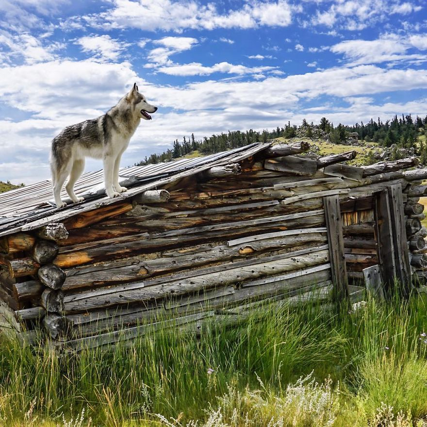 Important-to-travel-with-your-pets-12