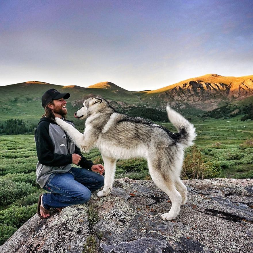 Important-to-travel-with-your-pets-15
