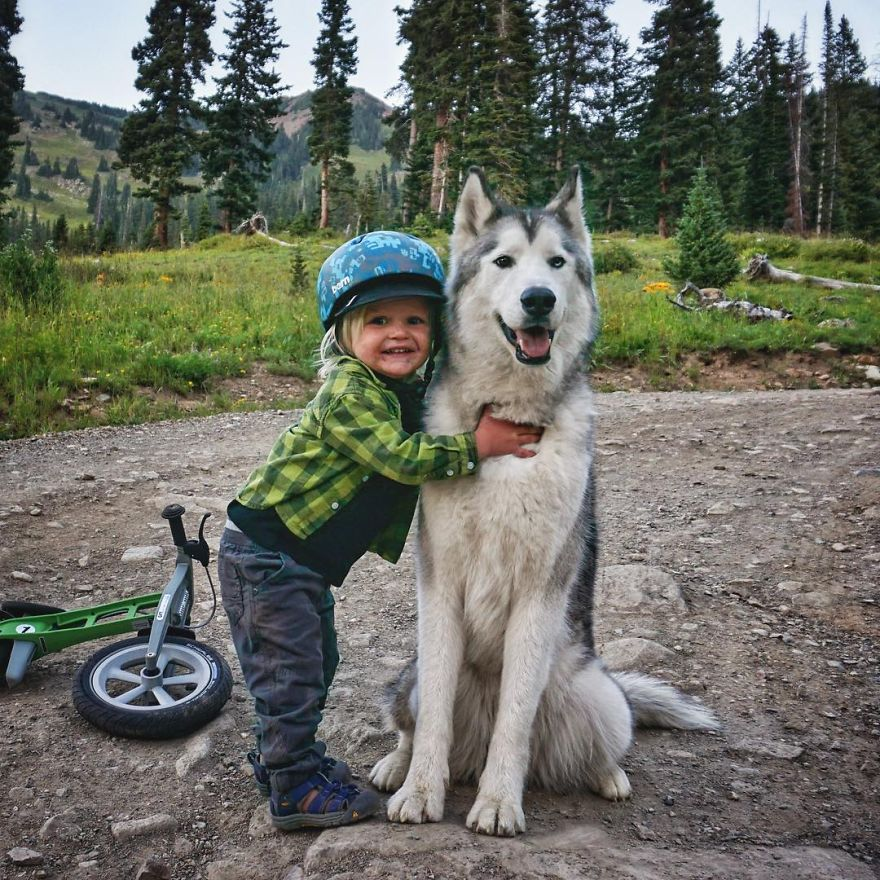 Important-to-travel-with-your-pets-16