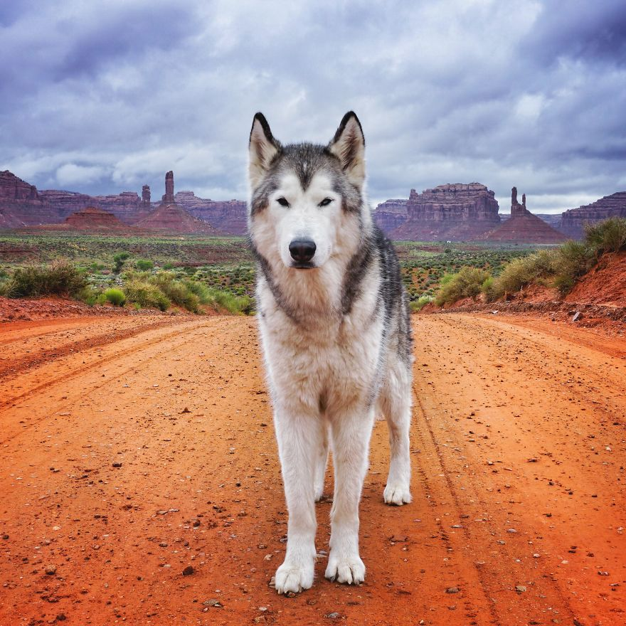 Important-to-travel-with-your-pets-2