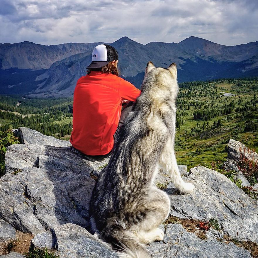 Important-to-travel-with-your-pets-22
