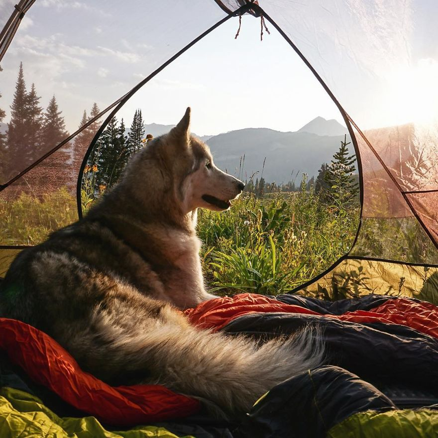 Important-to-travel-with-your-pets-4