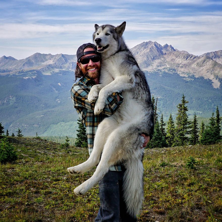 Important-to-travel-with-your-pets-5