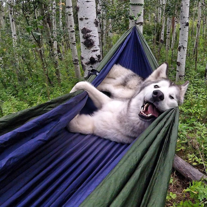 Important-to-travel-with-your-pets-6