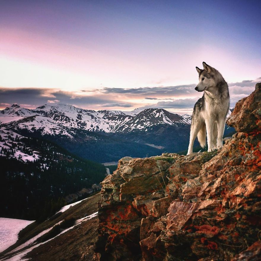 Important-to-travel-with-your-pets-8