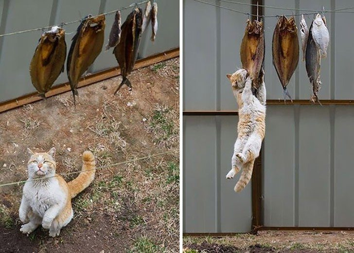 Brave-cats-that-got-caught-trying-to-execute-their-insidious-plans-6