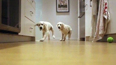 9-month-owner-puppies-taking-video-run-eat-look-came