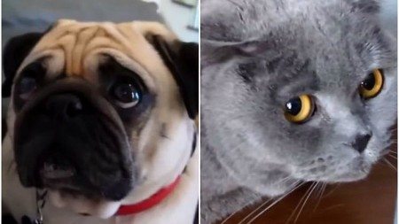 dogs-cats-react-differently-get-caught-bad-things