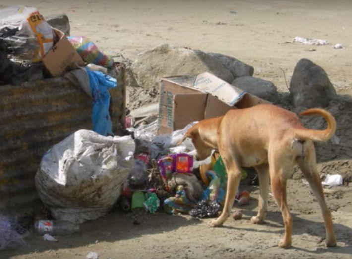 stray-dog-saved-newborn-baby-girl-abandoned-mother-dumpster-6