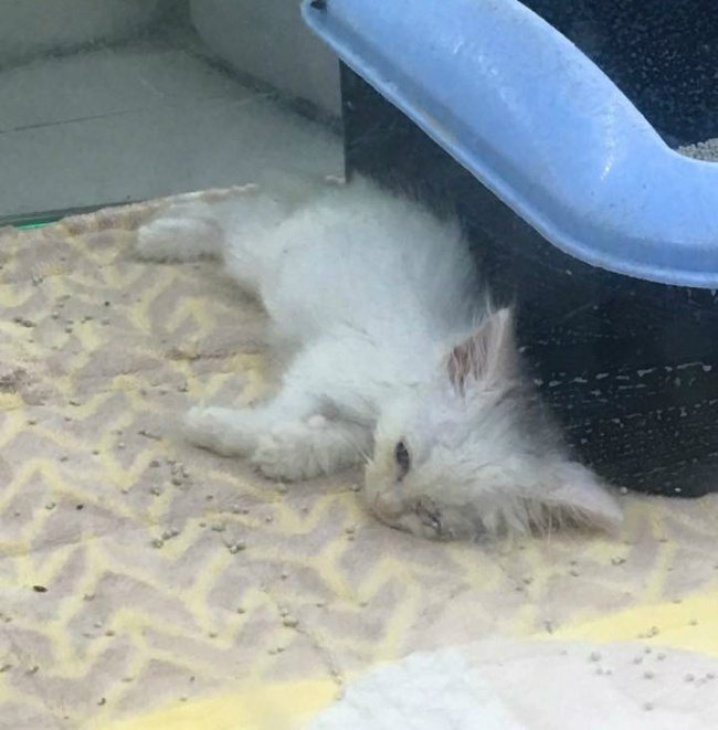 kitten-condemned-death-woman-gave-chance-new-life-1