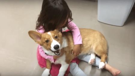child-often-capricious-just-need-get-dog-like