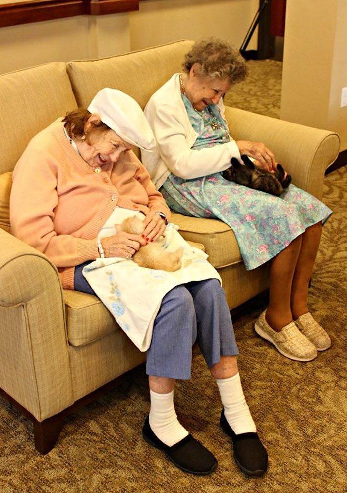 elderly-people-alzheimers-disease-care-newborn-kittens-unusual-project-arizona-1