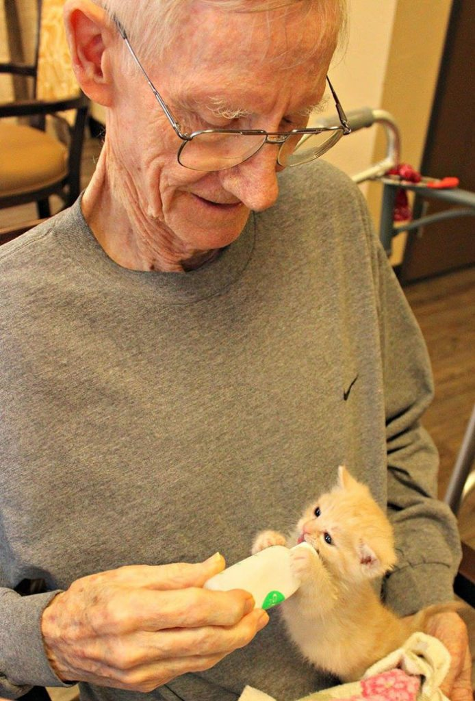 elderly-people-alzheimers-disease-care-newborn-kittens-unusual-project-arizona-4