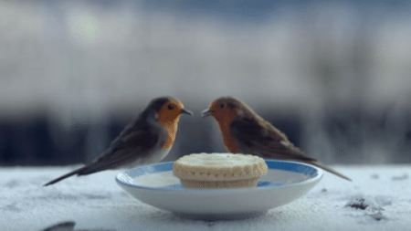 touching-christmas-story-swallow-always-returns-home