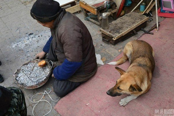 every-morning-dog-pushes-wheelchair-disabled-owner-market-story-canine-devotion-1
